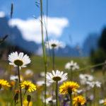 Pflanzenwelten. Ein Wochenende im Pflanzenreich
