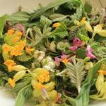 Zeit der Teekräuter - Kräutertee sammeln, mischen und zubereiten
