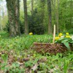 Jahresweiterbildung Essbare Wildpflanzen