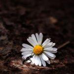 Individuelle Kräutererlebnisse und Wildpflanzenerkundung im eigenen Garten