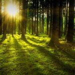 """""""Waldbaden"""" – die regenerierende Kraft des Waldes. Ein Feierabendangebot."""