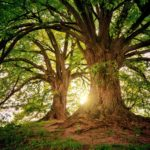 Entdeckungsreise in das Reich der Bäume