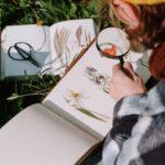 Bestimmungskurs - Wildpflanzen sicher bestimmen